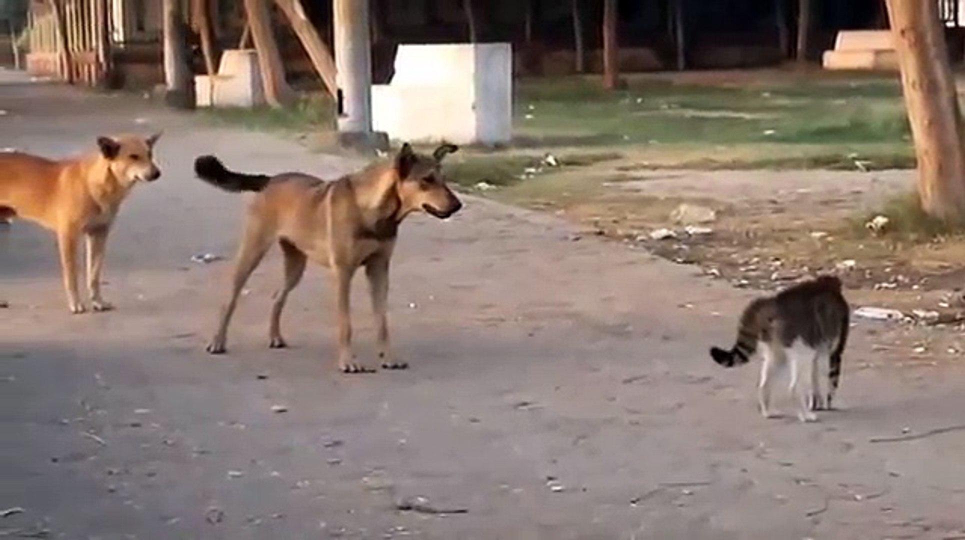 Mira La Pelea Entre Un Gato Y Una Banda De Perros Vídeo Dailymotion
