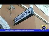 Corato  | Nascondeva  una serra di marijuana in casa, arrestato 32enne