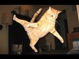 De drôles de chats n°2 | A mourir de rire | A Funny Cats Compilation