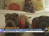 Missing service dogs found at Phoenix park