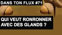 Qui veut ronronner avec des glands - #DansTonFlux 71