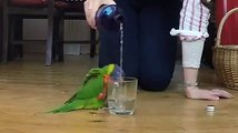 Beautiful Video, Nature is Very Beautiful, Beautiful Parrot HD
