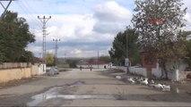 Edirne - Bulgaristan'dan Sınırı Geçip Edirne'ye Gelen Inekler Ortada Kaldı