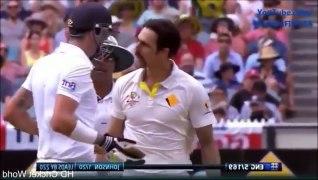 Fighting Crickets Funny Cricket Videos Cricket Clips