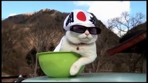 Best Funny Cats Video compilation for you guys to get rid of frustration 2016