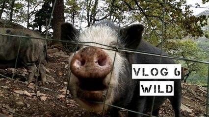 VLOG 6 - Wild
