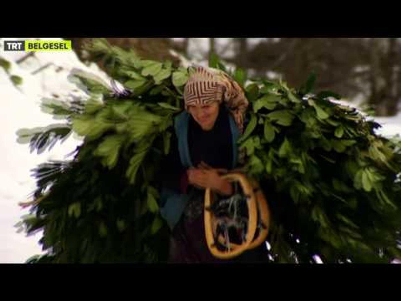 Kış Hikayeleri - 4. Bölüm Fragman - TRT Belgesel