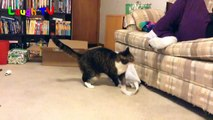 Funny Cats Reaction To Smelling Cheese | Top Cats Video Compilation