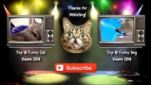 silly cat videos - cat videos funny - funny cat photos - Funny cat compilation