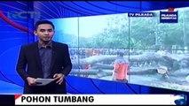 Hujan Deras Disertai Angin Kencang Membuat Sejumlah Pohon Tumbang di Pandeglang Banten