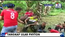 Warga Polewali Mandar Tangkap Ular Piton Sepanjang 10 Meter