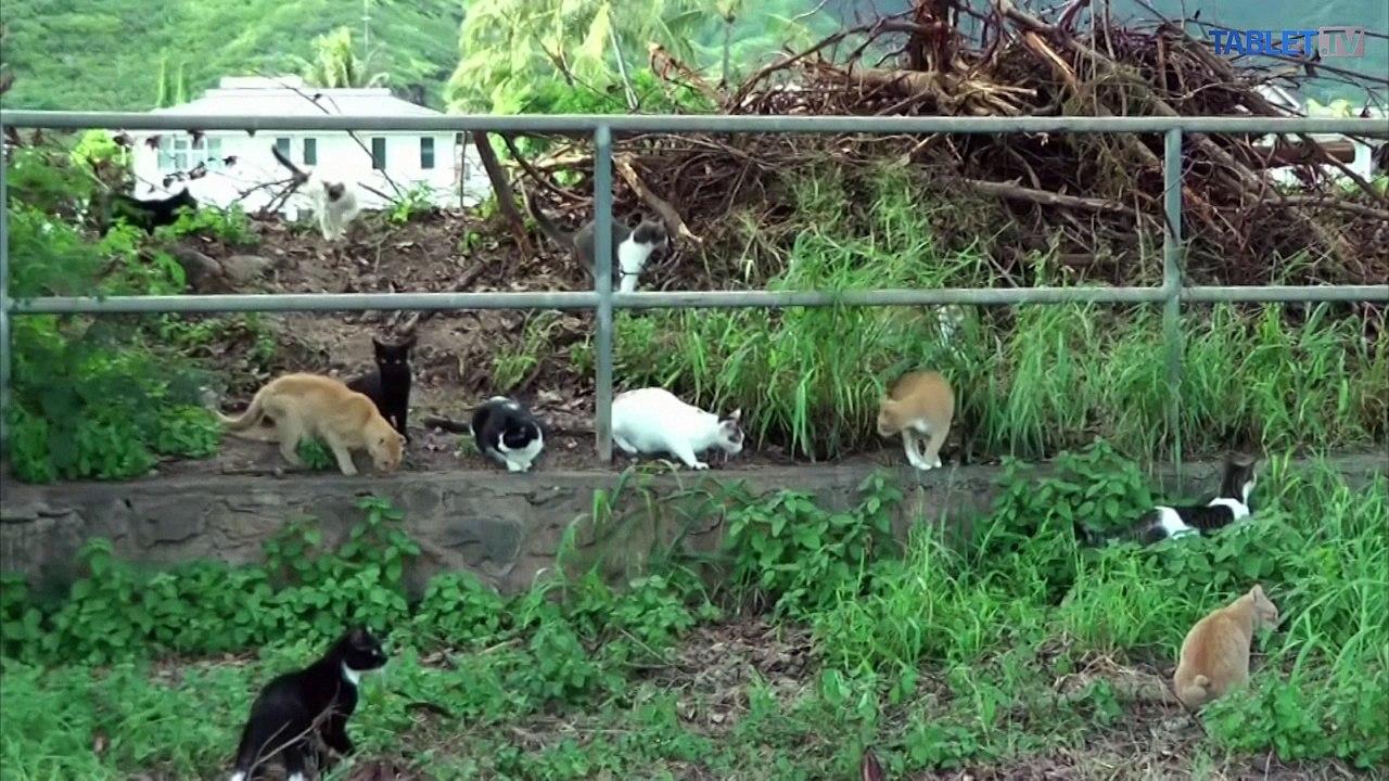 Túlavé mačky sú celosvetovým problémom,záchranári odporúčajú kastrácie