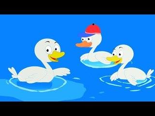 Five Ít Vịt | ươm phổ biến rhyme | em Video | Five Little Ducks  for kids