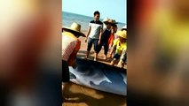 Beached whale rescued in China