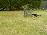 Terrain de jeux des chatons