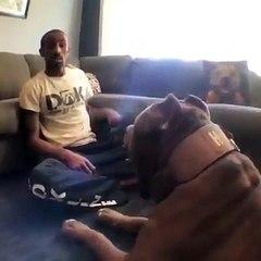 Bu köpeği görenlerin ağzı açık kaldı