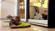FANNY CATS VIDEO - FANNY CATS COMPILATIONS - FANNY VIDEO - Funny Animals Funny Pranks Funny Fails
