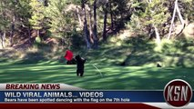 """Kid Snippets News: """"Viral Animals"""" (Imagined by Kids)"""