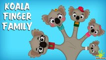 The Finger Family Koala Family Nursery Rhyme | Koala Finger Family Songs