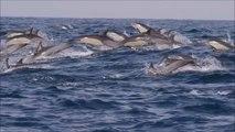 Le Sardine Run en Afrique du Sud : l'aventure sous-marine la plus magique