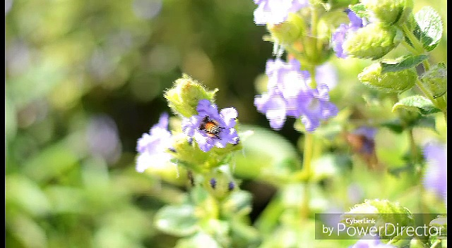 honey bee in Slow motion