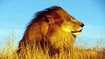 Top 10 Boar Attack - Wild Boar Attacks Leopard, Lion, Dog, Rhino, Tiger...