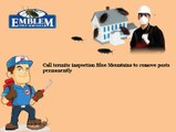 Termite Control Blue Mountains|Termite Inspection Blue Mountains