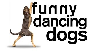 Dogs Dancing Compilation – DoggyMan