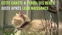 Une chatte adopte une portée de chiots rejetés par leur mère