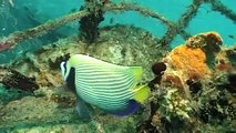 Maldives, A Diving Paradise - Now in High Quality! (Part 4/5)