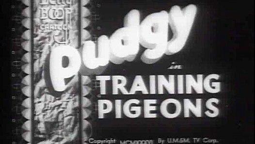 Training Pigeons