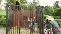 Harambe The Gorilla Interrupts Photo Shoot - Just For Laughs Gags
