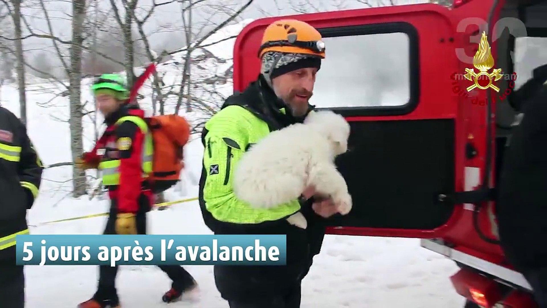 Avalanche en Italie : le magnifique sauvetage de trois chiots, retrouvés sains et saufs, redonne esp