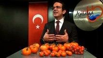 Antalya Çandır: 7 Liraya Satılan Domates 5.5 Liraya Üretiliyor