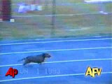 America's Funniest Home Videos- Animal Clips -funiest video of animal-funny cat video