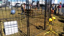 Une dresseuse est attaquée par un tigre du Bengal dans sa cage !