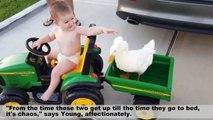 Ce canard devient le meilleur ami d'un bébé ! Et son protecteur