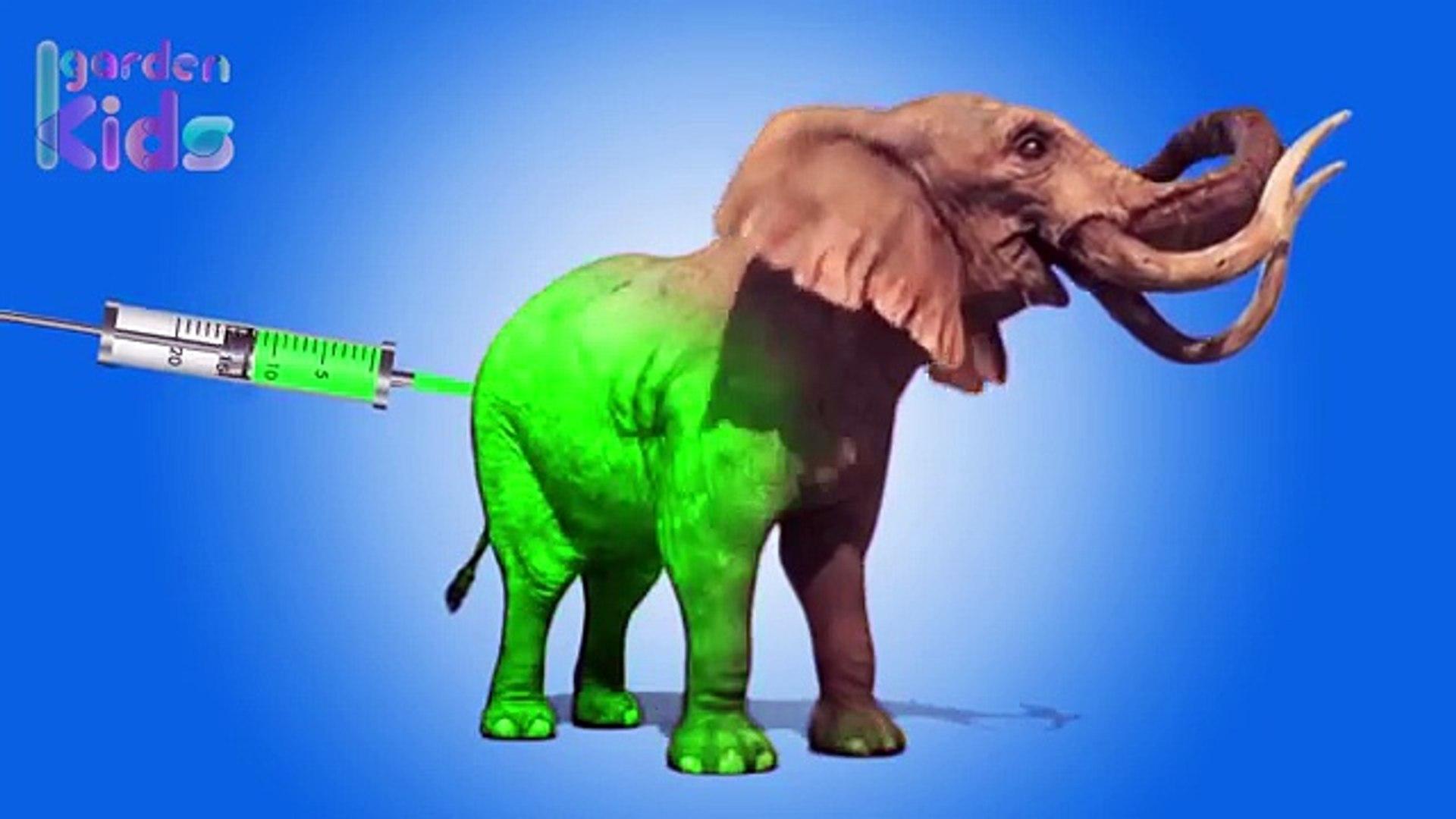 Learning Colors Injection Elephant | Elephant Colours for Kids | Learning Colours with Garden Kids