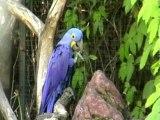 Le Parc Aux Oiseaux Villars les Dombes Part 1