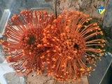 20080429-Fleurs aux Bains-Douches