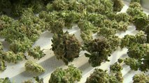 Marijuana votes in five states could have national impact