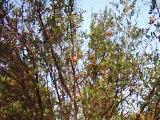 Granatum garden in Kallar Kahar Lake 01 July 2002 DSCI0001