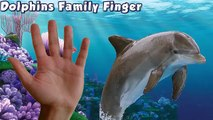 Dolphin Finger Family Song - Nursery Rhymes Dolphin Sea Animals Family Finger