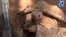 Le cri étonnant d'une tortue en plein accouplement-  Le rewind du jeudi 3 novembre 2016.