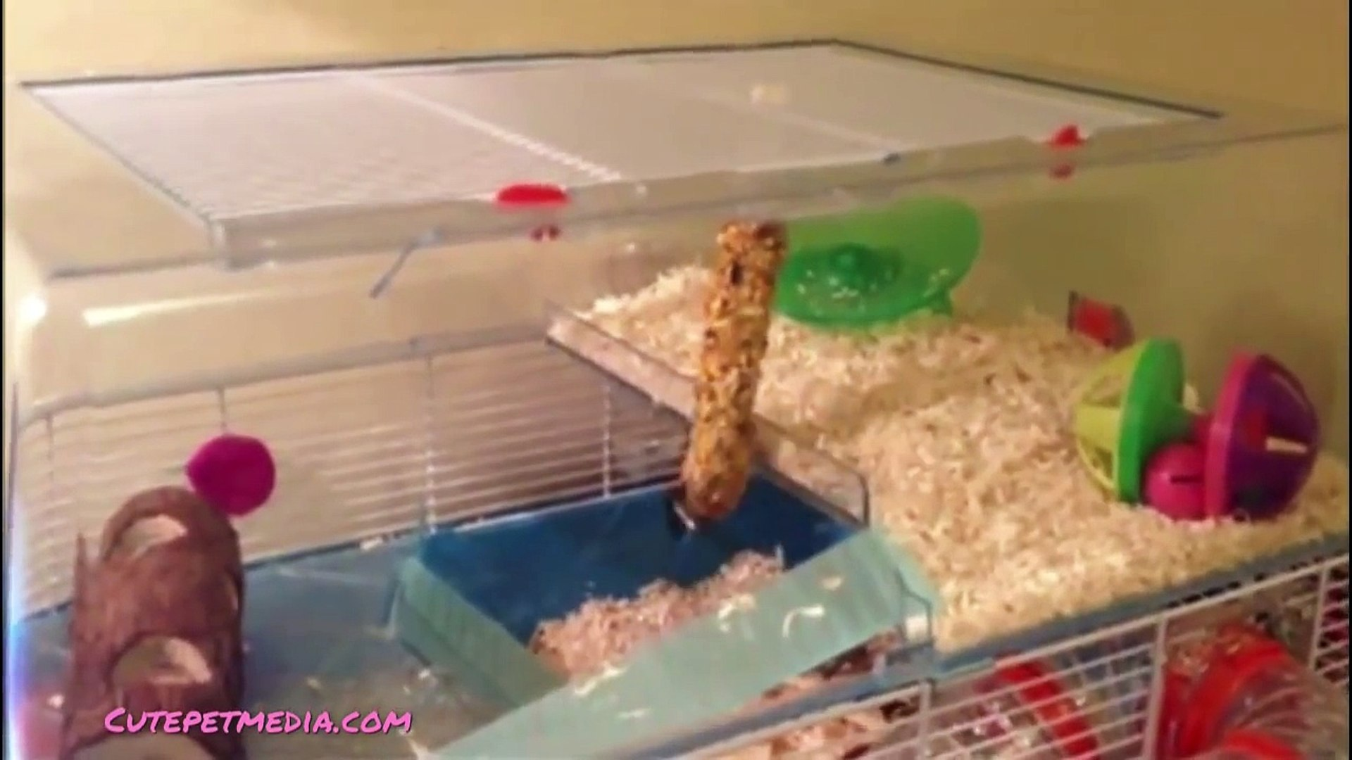 ANIMAL FAILS ?? FUNNY PET Fails Compilation [Funny Pets]