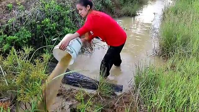 Beautiful Girl Fishing – Amazig Fishing at Battambang – Cambodia Traditional Fishing – (Part 3)