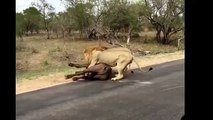 15 CRAZIEST Animal attacks Caught On Camera #2 Most Amazing Wild Animal Attacks