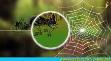 Почему пауки не попадают в свои сети мультфильмы для умных детей Формула Ума!