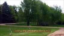Il appelle les poules comme si c'etait des chiens