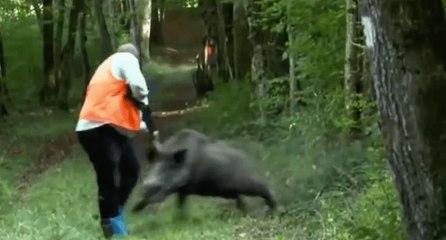 Les plus dangereux moments de chasse au sangliers